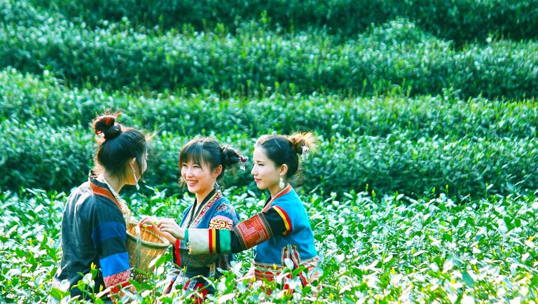 Guide to Longjing Tea Plantation, Hangzhou: What to Know Before You Visit